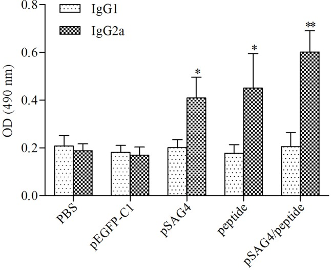 Determination of specific anti- T. gondii IgG1 and IgG2a in immunized mice. The sera of 20 mice of each group were collected from 2 weeks after the final immunization and the IgG subtypes levels were analyzed by ELISA. T. gondii -specific IgG1 and IgG2a were used in the detection. Results are expressed as means of the OD490 ± SD statistically significant differences ( p