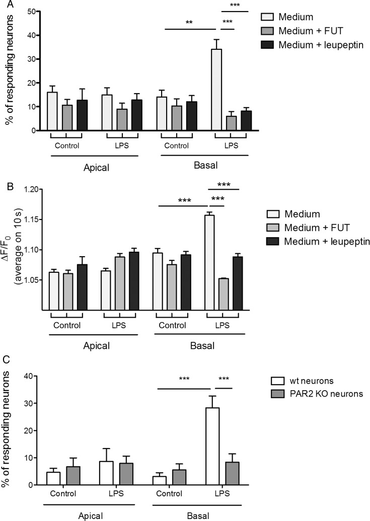 Conditioned medium from intestinal epithelial cells activates dorsal root ganglia (DRG) sensory neurons by the release of trypsin-like serine protease. Effect of the serine protease inhibitor FUT or the trypsin inhibitor <t>leupeptin</t> on the percentage of responsive neurons (A) and on the Fluo-4 (ΔF/F 0 ) measured Ca 2+ levels (B) stimulated by apical or basal supernatants recovered from control or lipopolysaccharide (LPS)-treated Caco-2 cell monolayers. (C) Percentage of sensory neurons dissociated from DRGs of wild-type (wt) or PAR 2 knockout (KO) mice responding to apical or basal supernatants recovered from control or LPS-treated Caco-2 cell monolayers. Data are expressed as mean±SEM and were compared using a one-way analysis of variance followed by Bonferroni's post-test (n=6, 2 wells per condition for this experimentation) **p