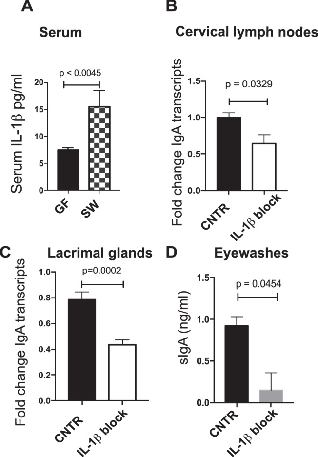 Systemic IL-1β blockade modulates IgA production in the LG. (A) ELISA for serum IL-1β levels in GF SW and SPF SW mice. Significance was determined by a Student's t-test. Cervical lymph nodes (B) and LGs (C) were harvested from SPF SW mice after systemic IL-1β antibody treatment and analyzed for IgA gene expression by using qRT-PCR. Significance was determined by a Student's t-test. Control mice received isotype control treatment. (D) Pooled eyewash samples were collected 24 hours after administration of an IL-1β blockade and were assayed for SIgA by ELISA. Significance was determined by a Student's t-test. Cumulatively, data show that ocular SIgA concentration at steady state depends on IL-1β signaling.
