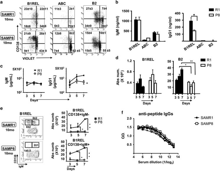In vitro and in vivo responses of B-cell subsets from SAMP8 mice stimulated with LPS ( a ) and ( b ). The indicated B-cell subsets identified as in Figure 1b from spleens of 10-month-old SAMP8 and SAMR1 mice were FACS-purified, and then labeled with the CellTrace Violet kit before culturing for 72 h in the presence or absence of LPS (see Materials and Methods). After culture, the cells were washed and stained to detect CD138 and the incorporated violet dye by flow cytometry. ( a ) Representative results from B1REL, ABC and B2 cells after LPS stimulation are shown. Fluorescence scales are logarithmic. The numbers in the plots are the frequency in each quadrant. Data are means±S.E.M. ( n =3). ( b ) The IgM and IgG1 secreted into the culture medium after 72 h were determined by ELISA. Data are means±S.E.M. ( n =3). Comparisons were made using a two-tailed Student's t -test: * P