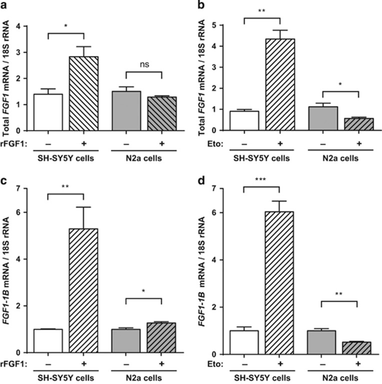 Extracellular FGF1 and etoposide increase endogenous fgf1 expression in SH-SY5Y cells, in contrast to N2a cells. SH-SY5Y and N2a cells were treated or not with rFGF1 for 72 h ( a – c ) or etoposide for 16 h ( b – d ). The levels of all fgf1 mRNAs ( a , b ) or of the alternative 1B fgf1 mRNA ( c , d ) were analyzed by RT-PCR. The 18S rRNA levels were used as a control for quantifications. The graphs represent the mean ±S.E.M. of three independent experiments. Student's t -tests were performed ( n =3; n.s.: P > 0.05; * P ⩽0.05; ** P ⩽0.01; *** P ⩽0.001)