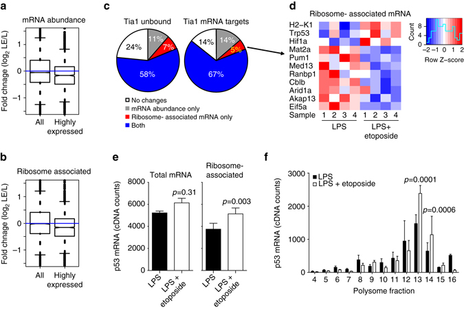 DNA damage induces mRNA translation of p53 in B cells. a , b Global analysis of changes in mRNA abundance ( a ) and mRNA association with ribosomes ( b ) after treatment with etoposide of LPS-activated B cells. Box plots were generated with data from all genes or from only a selection of highly expressed genes. These genes were selected after calculating the mean number of normalized reads annotated to each gene in our mRNAseq and in our PolyRibo-3′ RNA-seq libraries. Then, windows of expression were generated by adding or subtracting 1000 counts (mRNAseq window in log2 is 11.09