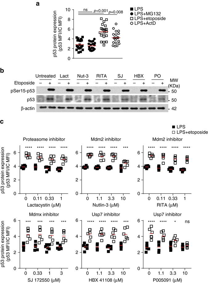 Proteasome does not regulate p53 protein synthesis in B cells. a Quantitation by flow cytometry of p53 protein expression in LPS-activated B cells treated with MG132 (10 μM), etoposide (20 μM) or actinomycin D (ActD, 5 μg ml −1 ). Data are from six independent experiments with 2 to 4 biological replicates in each. Mann–Whitney test was performed. b Immunoblot analysis of pSer15-p53, p53 and β-actin in activated B cells treated with Lactacystin (Lact, 1 μM), Nutlin-3 (Nut-3, 10 μM), p53 Activator III RITA (1 μM), SJ172550 (SJ, 1 μM), HBX41108 (HBX, 10 μM) or P005091 (P0, 10 μM) prior induction of DNA damage with etoposide. One of the two independent experiments performed is shown. c Quantization by flow cytometry of p53 expression in B cells treated with different doses of the inhibitors described in b . Data are from six biological replicates collected in two independent experiments. Two-way ANOVA and Bonferroni post-test analysis was performed ( ns non-significant, * P
