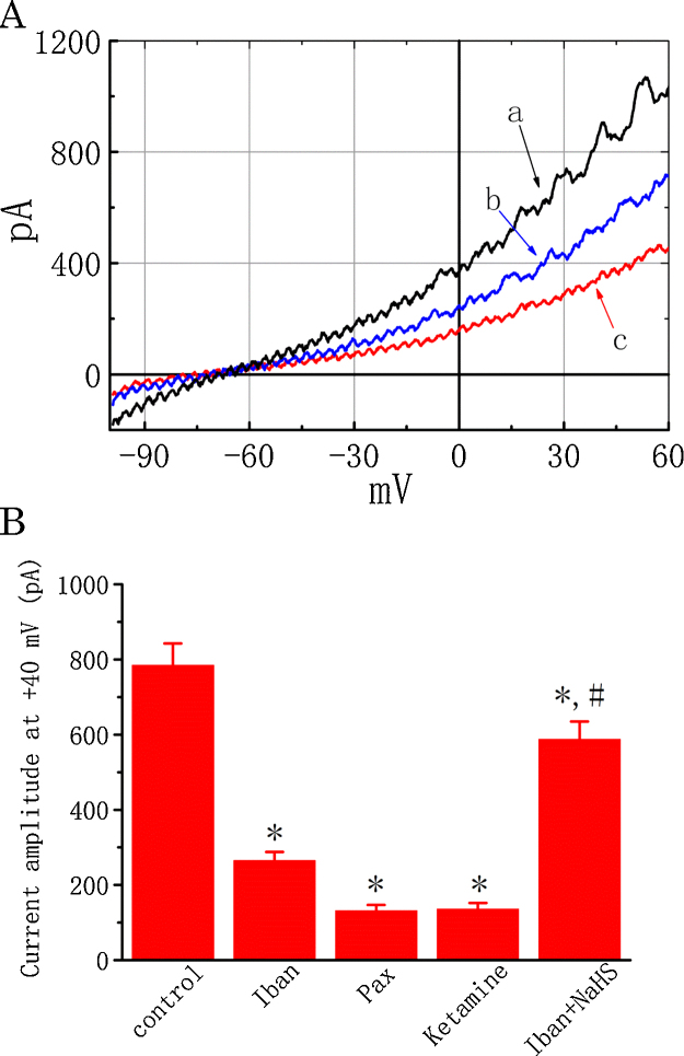 Effect of Iban on I K recorded from MDCK cells. (A) Original current traces obtained with or without addition of Iban at −50 mV and a long ramp pulse from−100 to +60 mV with a duration of 1 s at a rate of 0.05 Hz. a: control (black); b: 10 μM Iban (blue); c: 30 μM Iban (red). (B) Summary of the data showing effects of Iban, paxilline, ketamine and Iban plus NaHS on the I K amplitude measured at the level of +40 mV. Values are means ± SEM for n = 15–18 cells for each group. Iban: 30 μM Iban; Pax: 1 μM paxilline; Ketamine: 100 μM ketamine; NaHS: 100 μM sodium hydrosulfide. * Significantly different from control ( P