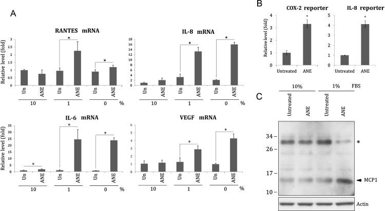 ANE under lower serum condition induces inflammatory cytokines more efficiently. (A) OC2 cells cultured with indicated concentrations of FBS were treated with 0.5 mg/ml ANE. The cells were harvested for measurement of IL6, IL8, RANTES or VEGF transcripts 24 h later. The value of the untreated, 10% FBS-supplemented cells was defined as 1. (B) The cells transfected with IL8 or COX2 promoter reporter were cultured in medium containing 1% FBS. The luciferase activity was determined 24 h after ANE treatment. (C) Similarly treated cells were harvested for Western blot. The upper signal marked with asterisk might be a glycosylated form of MCP1.