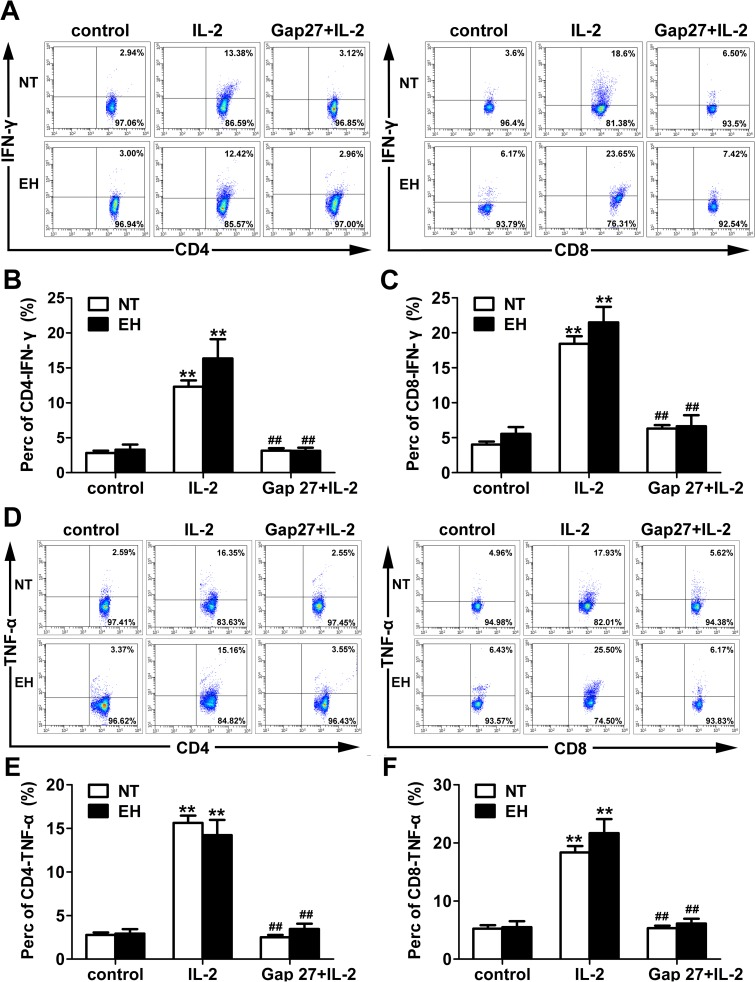 Gap27 alters pro-inflammatory cytokines production in T lymphocytes from EHs and NTs. Representative dot plots of T lymphocytes from unstimulated PBMCs of EHs and NTs. PBMCs of EHs and NTs were stimulated in vitro with IL-2 (1000 U/ml) for 24 h. Gap27 (500 μM) was added to culture supernatants for the last 48 h. Subsequently, the cells were harvested and stained for CD4 + /CD8 + , IFN-γ and TNF-α for flow cytometry analysis (A and D). B and C, The percentage of CD4 + (B) or CD8 + (C) T cells expressing IFN-γ are presented as the percentages of total CD3 + T cells. E and F, Percentage of CD4 + or CD8 + T cells among CD3 + T cells expressing TNF-α. Data show the mean ± SEM of the percentage of IFNγ or TNF-α producing CD4 + or CD8 + T cells. ** p