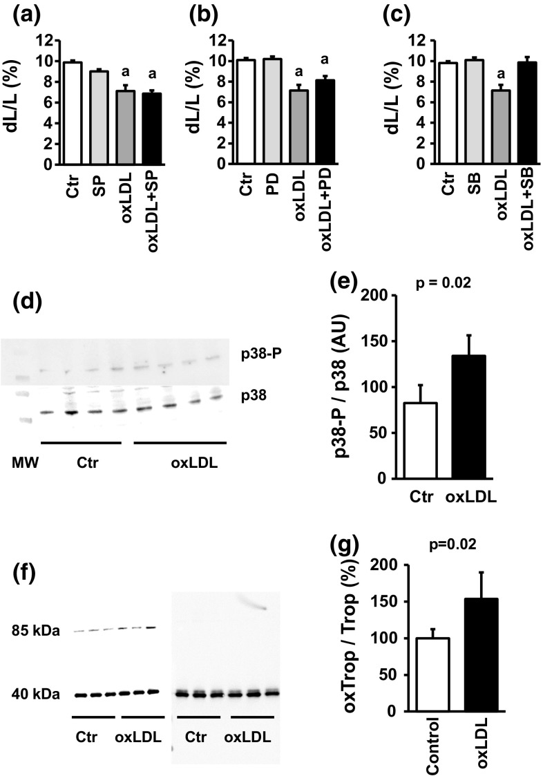 Participation of MAPK pathways in oxLDL-dependent effects: a cell shortening of cardiomyocytes exposed to oxLDL (20 µg/ml) and SP600125 (10 µM). b Cell shortening of cardiomyocytes exposed to oxLDL (20 µg/ml) and PD98059 (10 µM). c Cell shortening of cardiomyocytes exposed to oxLDL (20 µg/ml) and SB202190 (10 µM). In a – c a represents p