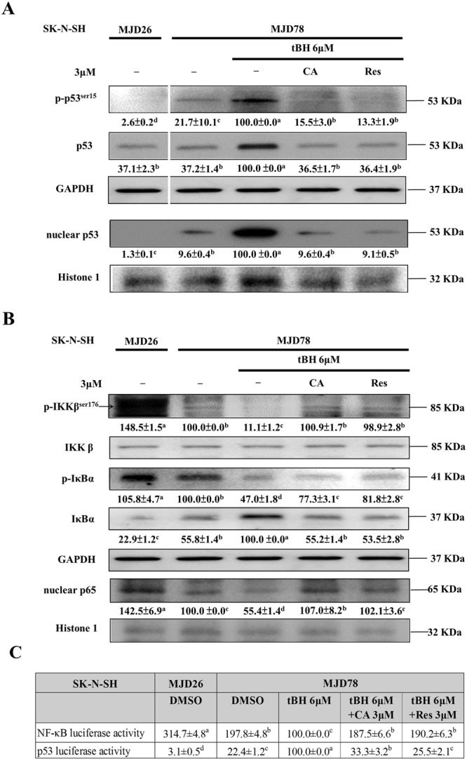 Effects of CA and Res on activation of p53 and NF-κB in tBH-treated SK-N-SH-MJD78 cells. (A) and (B) Protein expression of phosphorylated and total p53, IKK-β, IκB-α, and nuclear p53 and p65. (C) NF-κB and p53 reporter gene activities (3-h and 4-h treatments for p53 and NF-κB activation, respectively). Data are the mean ± SD and are expressed as the percentage of SK-N-SH-MJD78 cells treated with tBH alone. Values not having the same letter are significantly different (p
