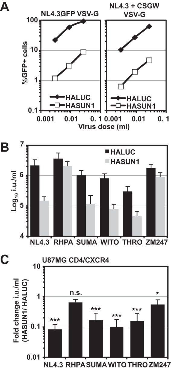 HIV-1 strains have differential sensitivities to the SUN1-induced block. (A) VSV-G-pseudotyped NL4.3GFP reporter virus or virus derived by cotransfecting NL4.3 with the GFP LV pCSGW was produced in parallel and titrated on U87MG CD4/CXCR4 cells expressing HALUC or HASUN1. Percentages of infected cells were determined 48 h later by flow cytometry. (B) U87MG CD4/CXCR4 cells expressing HALUC or HASUN1 were infected with the indicated VSV-G-pseudotyped virus produced by cotransfection with the HIV-1 GFP LV pCSGW, and infectious titers (in infectious units [i.u.] per milliliter) were determined from 10 viral doses of two independent biological replicates. (C) Presentation of the same data as shown in panel B, here with the fold changes (HASUN1/HALUC ratios) for mean titers with standard deviations. Statistical analysis was performed using an unpaired two-tailed t test. ns, not statistically significant; *, P