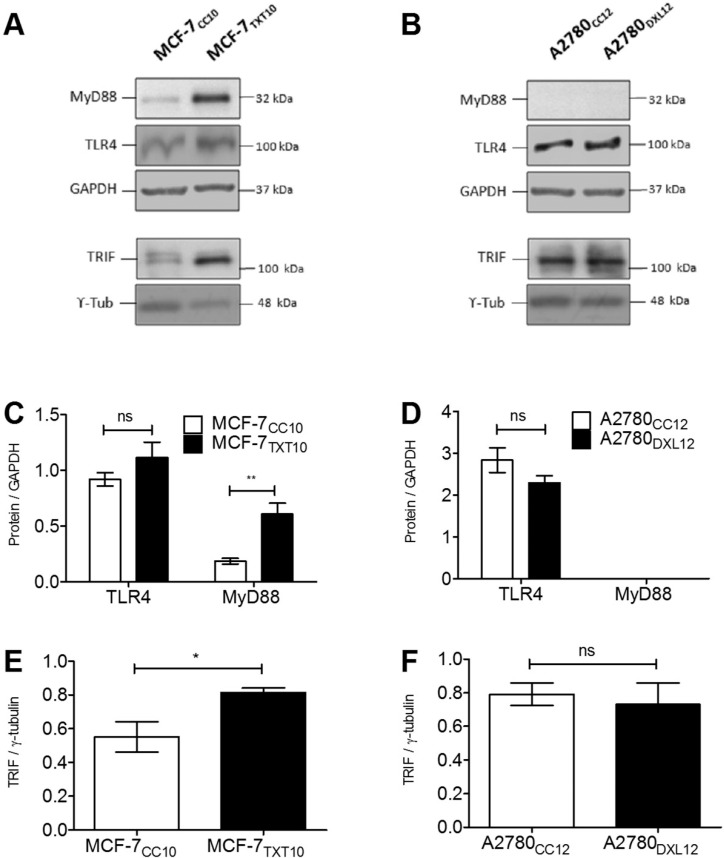 Levels of TLR4 and adaptor proteins during acquisition of resistance to docetaxel. Immunoblots were performed from extracts of MCF-7 and A2780 drug-naive and drug-resistant cell lines (A and B) in order to confirm the presence or absence of TLR4 and adaptor proteins MyD88 and TRIF. Changes in protein levels of drug-naive and drug-resistant cell lines were assessed by densitometry (C, D, E, and F). Statistical analysis consisted of two-tailed T-tests; *p