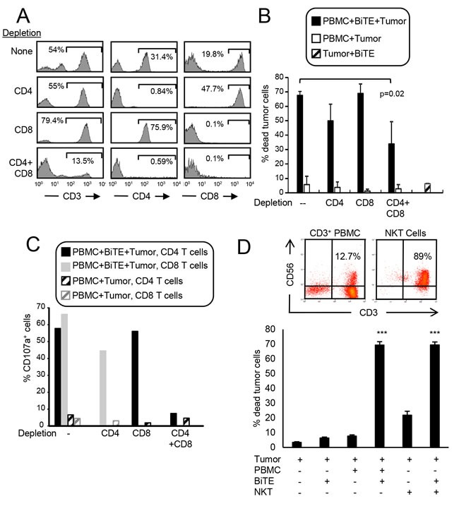 CD3xPDL1 BiTE activates both CD4 + and CD8 + cytotoxic T cells and NKT cells A . PBMC from healthy human donors were either undepleted, or depleted for CD4 + , CD8 + , or CD4 + plus CD8 + T cells. Depleted populations were stained with fluorescently tagged antibodies to CD3, CD4, and CD8, and the CD3 + cells gated and analyzed for CD4 and CD8 expression. B . Violet-labeled PDL1 + H358 tumor cells were incubated with the depleted or not depleted PBMC ± BiTE (200ng/mL), and analyzed for % dead tumor cells. PBMC:tumor cell ratio is 20:1 for undepleted and depleted populations. For the undepleted samples the ratio of CD8 and CD4 T cells to tumor was 5.45:1 and 8.04:1, respectively. In the CD8-depleted and CD4-depleted samples the ratio of CD4:tumor was 16.08:1 and the ratio of CD8:tumor was 11.52:1. Data are the average of three independent experiments. C . The cells of panel B were stained with fluorescent antibodies to CD4, CD8, and CD107a and the CD4 and CD8 cells gated and analyzed for CD107a expression. Data are representative of one of two independent experiments. D . Violet-labeled ± C8161 tumor cells were incubated with magnetic bead purified CD3 + cells (PBMC) or purified CD3 + CD56 + NKT cells ± BiTE (200ng/mL). Data are representative of three independent experiments. Values with * are significantly different from values without *.
