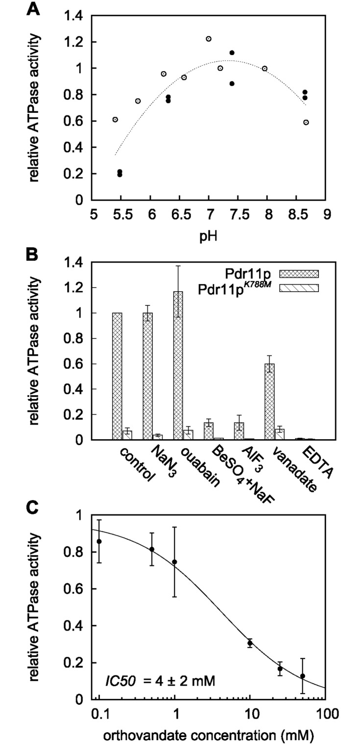 """ATPase activity of solubilised Pdr11p. ATPase activity of the purified detergent-solubilised transporter was assayed as described under """"Materials and Methods"""" using [ γ - 32 P] ATP. A: ATPase activity as a function of pH. Open and filled circles are data from two independent experiments. Values are normalised with respect to the values at pH 7.2 (open circles) or pH 7.4 (closed circles). The dashed line is included to guide the eye. B: Effect of various inhibitors: NaN 3 , 5 mM; ouabain, 5 mM; BeSO 4 , 1 mM; NaF, 5 mM; AlF 3 , 1 mM; orthovanadate, 1 mM; EDTA, 1 mM. C: ATPase activity as a function of orthovanadate concentration. Fitting of data to a dose-response/activity curve (see Material and methods ) gives IC 50 = 4 ± 2 mM, and a Hill coefficient = 0.8 ± 0.2. Results in B and C are the mean ± S.D. from at least two independent experiments relative to the value obtained for the purified detergent-solubilised protein in the absence of inhibitors (control)."""