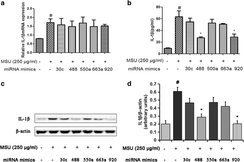 MicroRNA (miR, miRNA)-488 and miR-920 inhibit monosodium urate (MSU)-induced interleukin (IL)-1β protein expression in monocytic THP-1 cells. The miRNA mimics or negative control (NC) mimics (50 nM) were transfected into THP-1 cells using Lipofectamine RNAiMAX reagent in accordance with the manufacturer's instructions. After 24 h of transfection, cells were stimulated for 3 h with 0.5 μM 12-myristate 13-acetate. Then, cells were washed and stimulated with 250 μg/ml MSU crystals for 24 h to detect the production of IL-1β. After the treatment, the cells were collected and analyzed by quantitative real-time polymerase chain reaction ( a ) or Western blotting ( c ). The cell culture supernatants were collected to detect the concentrations of IL-1β by enzyme-linked immunosorbent assay ( b ). d Densitometric analysis of immunoblot band intensities for IL-1β normalized by β-actin. Values are expressed as mean ± SEM of three independent experiments. # P