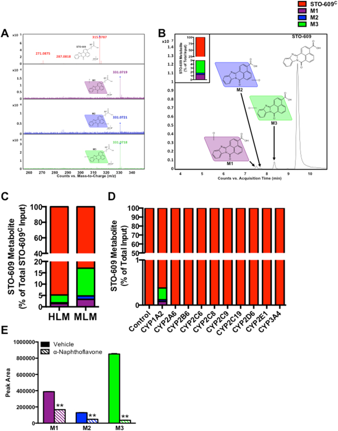 Metabolic Analysis of STO-609 in Human Liver Microsomes. ( A) Representative MS/MS spectra of commercial STO-609 (STO-609 C ) metabolites M1 (purple), M2 (blue) and M3 (green) compared to that of STO-609 C (black). (B) Chromatograms of STO-609 C (red) and its metabolites (M1 (purple), M2 (blue) and M3 (green)) following incubation with human liver microsomes (HLM). Triplicate incubations were conducted in 1X PBS (pH 7.4) containing STO-609 C (30 µM), HLM (1.0 mg/ml) with or without NADPH (1.0 mM). The metabolites were quantified by UHPLC-QTOFMS. The accompanying inset shows the representative amount of each STO-609 metabolite calculated as a percent of total STO-609 C . (C) Comparison of STO-609 C metabolism in human (HLM) versus mouse liver microsomes (MLM). The metabolites were quantified by UHPLC-QTOFMS. Data are graphed as the representative amount of each STO-609 metabolite calculated as a percent of total STO-609 C . (D) cDNA-expressed P450s (CYP1A2, CYP2A6, CYP2B6, CYP2C8, CYP2C9, CYP2C19, CYP2D6, CYP2E1 and CYP3A4) were used to determine the role of individual CYP450 enzymes in the formation of STO-609 metabolites. All samples were analyzed by UHPLC-QTOFMS. Each STO-609 metabolite is represented as a percent of total STO-609 C : M1 (purple), M2 (blue) and M3 (green). Conditions where no metabolites of STO-609 were identified are denoted as 100% of unmetabolized STO-609 C (red). (E) Validation of CYP1A2 in the formation of M1, M2 and M3 metabolites of STO-609 C . Incubations were conducted in 1X PBS (pH 7.4) containing STO-609 C (30 µM), α-naphthoflavone (CYP1A2 inhibitor, 6.0 µM), HLM (1.0 mg/ml) and NADPH (1.0 mM). Metabolites were identified by UHPLC-QTOFMS. The peak area of the M1, M2 and M3 metabolites generated from the incubation of STO-609 C with HLM in the absence of α-naphthoflavone was set as 100%. All data are expressed as mean ± s.e.m. (n = 3). **P