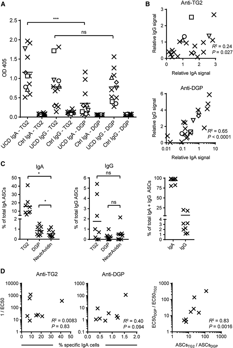 Detection of Antigen-Specific Serum Antibodies and Gut PCs (A) Serum antibody reactivity against TG2 or DGP in patients with untreated celiac disease (UCD, n = 12) or control subjects (n = 12) as determined by ELISA. Sera were diluted 1:200 and added to biotinylated TG2 or biotinylated DGP (biotin-GSGSGS-PLQPEQPFP, harboring an immunodominant gliadin epitope) ( Schwertz et al., 2004 , Steinsbø et al., 2014 ) immobilized on streptavidin followed by detection of bound IgA or IgG using isotype-specific goat anti-human antibodies. The dynamic range of the assay was comparable for detection of the different antibodies. Open symbols indicate subjects from whom serum antibodies were purified for further characterization. The same symbols are used throughout this study. (B) Correlation between the levels of serum IgA and IgG against each of the two antigens in celiac disease patients (n = 20). Reactivity was measured by ELISA, and the signals for each antigen are given relative to the IgA signal obtained with a reference serum sample (UCD1283). (C) ELISPOT detection of total or antigen-specific antibody-secreting cells (ASCs) producing IgA or IgG in gut biopsy specimens obtained from celiac disease patients (n = 8). Cell suspensions were added to coated NeutrAvidin alone or NeutrAvidin associated with biotinylated TG2 or DGP as indicated. In the right panel, antigen specificity was not considered, and only the numbers of total IgA- or IgG-secreting cells were counted. (D) Correlations between the number of gut ASCs making antigen-specific IgA and the level of antigen-specific IgA in serum. EC 50 values represent the serum dilution, which gives half-maximal response in ELISA. The right panel shows the ratio between TG2- and DGP-specific gut ASCs (x axis) and the corresponding ratio between serum antibody levels (y axis). Horizontal lines indicate means, and differences between groups were analyzed using repeated-measures one-way ANOVA. ∗ p