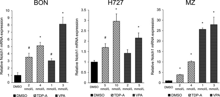 Notch1 mRNA expression after HDAC inhibitor treatment in neuroendocrine ( NE ) cell lines. Three NE cell lines BON , H727, and MZ ‐ CRC ‐1 were treated with HDAC inhibitors TDP ‐A and VPA in increasing concentrations close to their IC 50 . The data were plotted relative to the mRNA expression levels in cells treated with DMSO vehicle control. All values were presented as mean relative fold ± SEM (* P