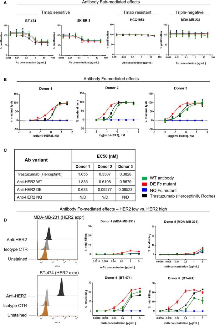 Assessments of direct and Fc-mediated effects of anti-HER2 Fc variants against breast cancer cells. (A) Effects of anti-HER2 antibody variants on the proliferation of trastuzumab-sensitive (BT-474, SK-BR-3), trastuzumab-resistant (HCC1954) and triple-negative (MDA-MB-231) breast cancer cell lines. Anti-HER2 variants inhibited the proliferation of BT-474 and SK-BR-3 cells in a similar dose-dependent manner, but did not affect the proliferation of MDA-MB-231 or HCC1954 cells. Graphs represent an average of two experiments ± SD. (B) Human peripheral blood NK cell-mediated ADCC of BT-474 cancer cells induced by anti-HER2 variants measured by LDH release. Graphs are representative of independent experiments with three different human NK cell donors; data were normalized to minimal and maximal cell lysis. Error bars represent SEM values from technical replicates. N/D: not detected. (C) Effective concentration [(EC50) nM] measurements of ADCC by three human NK cell donors. (D) NK cell-mediated ADCC (measured by LDH release) of HER2 low (MDA-MB-231) and HER2 high (BT-474) breast cancer cells induced by anti-HER2 variants. The flow cytometric histograms on the left depict HER2 expression levels in MDA-MB-231 (top) and BT-474 (bottom) compared to unstained cells or cells stained with isotype control mAb. The graphs represent total cell killing levels of MDA-MB-231 cells (top) and BT-474 cells (bottom) mediated by NK cells from two different donors (Donors 4 and 5) at different concentrations of anti-HER2 variants.