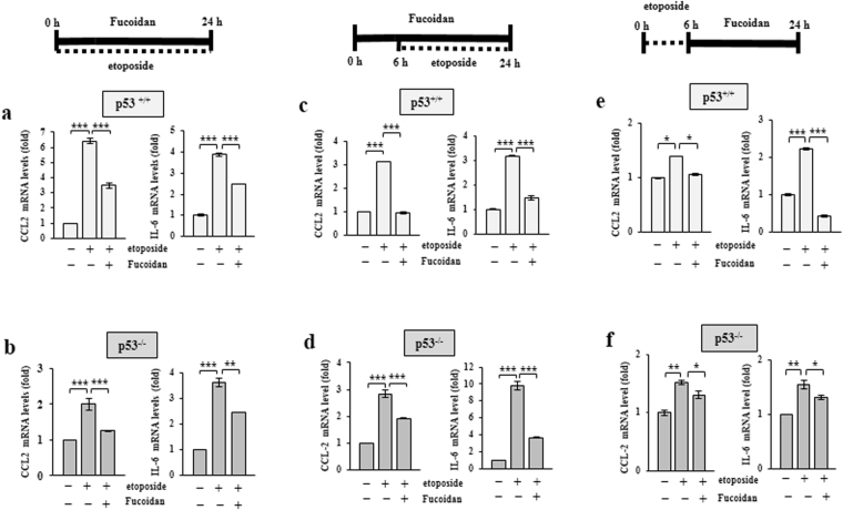 Oligo-Fucoidan reduces CCL2 and IL-6 expression. CCL2 and IL-6 mRNA expression levels were examined in the p53 +/+ ( a , c , e ) and p53 −/− ( b , d , f ) cells. Cells treated with etoposide (40 μM) alone or etoposide and Oligo-Fucoidan (400 μg/ml) for 24 h were studied ( a , b ). The cells were pre-incubated with or without Oligo-Fucoidan for 6 h before being treated with etoposide for another 18 h ( c , d ). The cells were analyzed after being exposed to etoposide for only 6 h before being treated with Oligo-Fucoidan for another 18 h ( e , f ). The data represent the mean ± SD of three independent experiments. *p