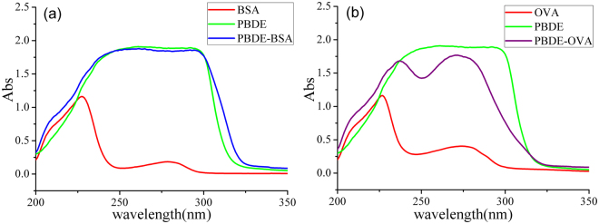 The UV spectra of PBDE hapten, protein and conjugates: ( a ) with <t>BSA</t> and ( b ) with OVA; absorbance value at the characteristic peak, 292 nm: OD BSA-PBDE = 1.860, OD PBDE-hapten = 1.893, OD BSA = 0.074; 272 nm: OD OVA-PBDE = 1.767, OD PBDE - hapten = 1.893, OD OVA = 0.401; C BSA : 0.20 g/L, C OVA : 0.20 g/L, and C hapten : 0.05 g/L; protein and conjugate were dissolved in PBS buffer; hapten was dissolved in <t>DMSO.</t>