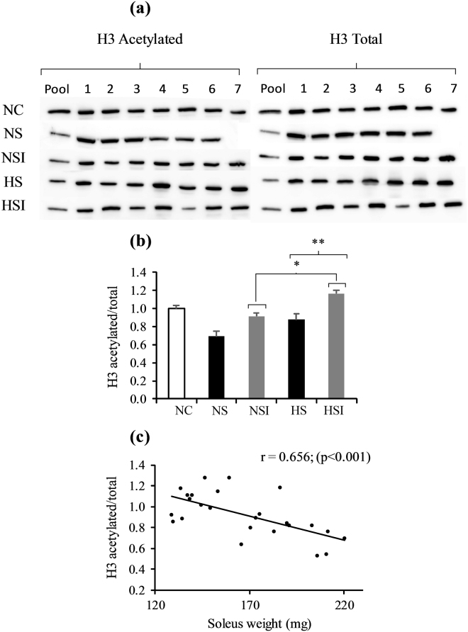 Effects of pulmonary inflammation and hypoxia exposure on histone H3 acetylation levels in soleus muscle subjected to an overload surgery. Panel a shows blots of the acetylated and the total form of histone 3. Numbers represent different animals. Western blots with antibodies against acetyl-lysine recognizing preferentially acetylated histone H3 and total histone H3 were quantified and normalized (panel b) and related to the soleus muscle weight (panel c). (n = 6-7; Mean ± SEM); NC: Normoxia Control; NS: Normoxia + Surgery; NSI: Normoxia + Surgery + Inflammation; HS: Hypoxia + Surgery; HSI: Hypoxia + Surgery + Inflammation. *Global effect of inflammation (NSI + HSI) vs . (NS + HS), p