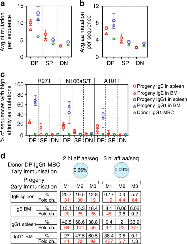 PC derived from DP IgG1 MBC are enriched in high affinity mutations. VDJ nucleotide (nt) and amino acid (aa) sequences were compared between IgG1 MBC subsets and their IgE and IgG1 progeny cells. IgG1 MBC subsets were purified from 10 weeks OVA-PEP1 immunised TBmc mice, and transferred together with CD4 memory T cells into Rag1 KO recipient mice. The recipient mice were immunised with OVA-PEP1. Spleen and bone marrow (BM) of the recipient mice were collected 2 weeks later. The VDJ repertoires of parental IgG1 MBC subsets and their IgG1 and IgE progeny were analysed using next generation sequencing. a , b Average number of nt a and aa b mutations per sequence. c Percentage of sequences containing R97T, N100aS/T or A101T high affinity CDR3 mutations. a – c Data are average ± SEM of three mice per group. d Enrichment in the percentage of CDR3 sequences containing 2 or 3 high affinity aa per sequence (hi aff aa/seq) in the IgE and IgG1 progeny of DP IgG1 MBC (M1, M2 and M3 indicate three recipient mice). Data are representative of two independent experiments