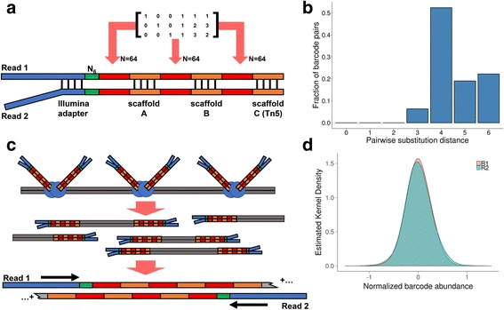 Overview of EXB-based molecular barcoding. a Structure of the EXB adapter. The adapter consists of a paired-end Y-adapter structure followed by a 6 bp random nucleotide sequence and three rationally designed 6 bp barcode subunits separated by distinct scaffold sequences. The 6 bp barcode subunits are random combinations of 64 possible sequences as output from the linear generator matrix as shown. The Tn5 transposase recognition sequence at the end of the adapter allows for the generation of sequencing libraries via in vitro Tn5 transposition. b Edit (substitution) distance metrics for all possible 6 bp barcode pairs. Over 93% of pairwise comparisons between barcodes have an edit distance greater than 4. c Schematic of in vitro transposition of EXBs. Tn5 transposase loaded with EXB adapters are incubated with double stranded cDNA. A gap-fill repair reaction then generates paired-end EXB sequencing libraries. After PCR, EXBs are read as inline barcodes, after which the insert sequence is read. d Single-end abundance of EXBs. Single-ended EXB identities were measured by pooling one million reads of each library