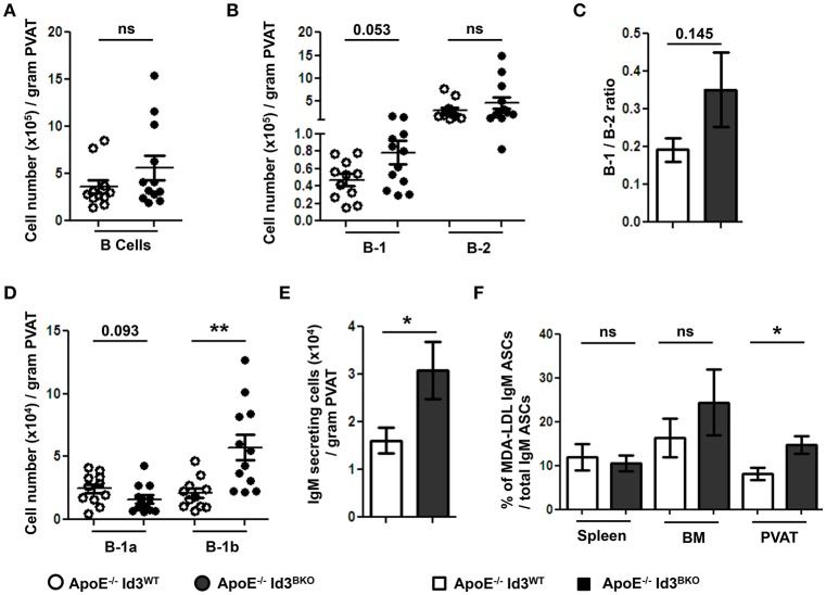 B-1b cells and IgM secreting B cells are increased in the PVAT of mice with B cell specific deletion of Id3 (ApoE −/− Id3 BKO ). Flow cytometry quantification in the PVAT of 8 weeks old ApoE −/− Id3 WT ( n = 11) and ApoE −/− Id3 BKO ( n = 12) mice for (A) total CD19 + B cells, (B) B-1 and B-2 cells, (C) B-1/B-2 ratio, (D) B-1a and B-1b cells, and (E) ELISPOT for total IgM secreting cells. (F) Percentage of malondialdehyde modified low density lipoprotein (MDA-LDL) specific IgM secreting cells in spleen, BM and PVAT of ApoE −/− Id3 WT ( n = 5) and ApoE −/− Id3 BKO ( n = 4–5) mice as measured by ELISPOT. Results are mean ± SEM, unpaired student t -test was performed ( * p