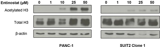 Effects of entinostat on histone H3 acetylation PANC-1 and SUIT2 Clone 1 cells were incubated for 72 hours in the presence of variable concentrations of entinostat (0-50μM). Cells were then lysed and subjected to Western blotting using an antibody directed at acetylated histone H3 or total H3. The membrane was then probed for β-actin to confirm equal loading of lanes.