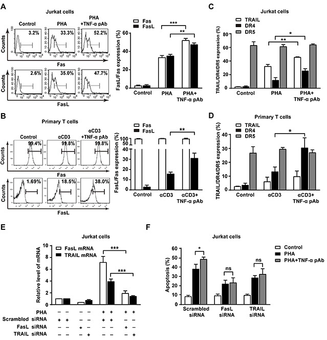 The reverse signaling of tmTNF-α promotes AICD through upregulating FasL/Fas and TRAIL/DR4 (A, B, C, D) Jurkat cells were simultaneously stimulated with PHA-P (5 μg/ml) and TNF-α pAb (1:100) for 24 h. PHA-preactivated primary T cells were restimulated with αCD3 (10 μg/ml) and TNF-α pAb for 24 h. Expression of FasL/Fas (A, B) and TRAIL/DR4/DR5 (C, D) was detected by flow cytometry. (E, F) Jurkat cells transfected with 100 nM siRNA for FasL or TRAIL for 48 h were activated with PHA-P (5 μg/ml) in the absence or presence of TNF-α pAb for 24 h. The mRNA levels of FasL and TRAIL were determined by Real-time qPCR (E) and the <t>apoptosis</t> was detected by Annexin V/PI (F). All the quantitative data represent means ± S.D. of at least three independent experiments. * p