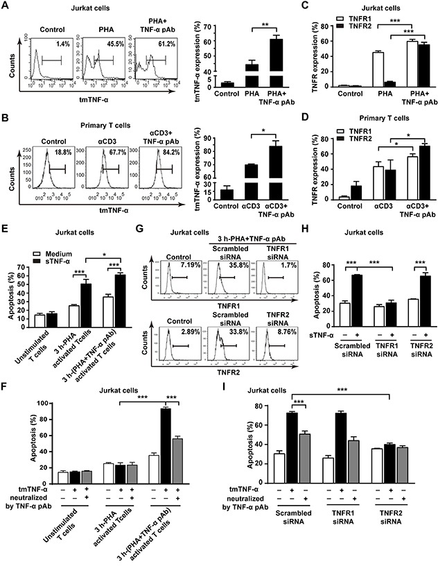 The reverse signaling of tmTNF-α enhances the sensitivity of T cells to TNF-α-induced AICD through upregulating TNFR (A, B, C, D) Jurkat cells were stimulated with PHA-P (5 μg/ml) in the absence or presence of TNF-α pAb (1:100) for 24 h. PHA preactivated T cells were reactivated by αCD3 (10 μg/ml) with or without TNF-α pAb (1:100) for 24 h. The expression of tmTNF-α (A, B) and two types of TNFR (C, D) was detected by flow cytometry. (E, F) Jurkat cells activated for 3 h by PHA-P (5 μg/ml) with or without TNF-α pAb were incubated for 4 h with sTNF-α (50 U/ml) or tmTNF-α stably transfected and fixed NIH3T3 cells at an effector/target ratio of 10:1. The apoptosis was detected by Annexin V/PI. (G, H, I) Jurkat cells transfected with 100 nM siRNA for TNFR1 or TNFR2 for 48 h were activated by PHA-P (5 μg/ml) with TNF-α pAb for 3 h, followed by incubation for 4 h with sTNF-α (50 U/ml) or tmTNF-α stably transfected and fixed NIH3T3 cells at an effector/target ratio of 10:1. The expression of TNFR1 and TNFR2 was analyzed by flow cytometry (G) and the apoptosis was detected by Annexin V/PI (H, I). For neutralization of tmTNF-α, the effector cells were treated with TNF-α pAb for 30 min prior to the addition to the target cells. All the quantitative data represent means ± S.D. of at least three independent experiments. * p
