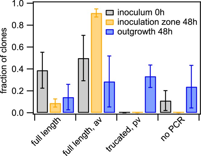 Pilin antigenic and phase variation. red wt (Ng106) and green wt (Ng165) were picked from the initial inoculum, the inoculation zone (48 h), and the outgrowth (48 h), respectively. After dilution and growth on agar plates, individual colonies (clones) were picked and pilE was sequenced. Sequences were categorised and the fraction shown is the number of sequences per category normalised by the total number of sequences of inoculum, inoculation zone and outgrowth, respectively. Full length: most abundant sequence in inoculum; full length, av: sequence change mappable to pilS sequence; truncated, pv: length change in poly-C sequence causing premature stop-codon; no PCR: PCR amplification did not result in a product. Mean and standard error of three independent experiments.