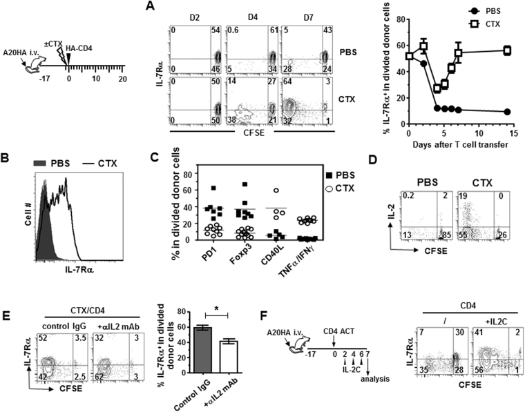 Host pre-conditioning with CTX allows adoptively transferred tumor-specific CD4+ T cells to differentiate into polyfunctional effector cells and regain IL-7Rα expression. ( A ) Kinetics of IL-7Rα expression on donor CD4+ T cells following adoptive transfer. Following the timeline depicted in the schema, mice with established systemic A20HA tumors were divided into two groups. One group of mice were pre-conditioned with CTX while the other group received PBS. All mice received adoptive transfer of HA-specific CD4+ T cells the next day. At the indicated time points, tail blood samples were collected and analyzed for IL-7Rα expression on donor CD4+ T cells by FACS. IL-7Rα expression profiles relative to cell division in transferred CD4+ T cells are shown in representative dot plots. The numbers indicate the percentage of cells in the corresponding quadrant. Results are summarized in graph at right. Data for day 0 and day3 are gated on total donor T cells because cells barely divided at these two time points. ( B ) Differential expression of IL-7Rα in donor CD4+ T cells in mice with or without CTX pre-conditioning. 7 days after T-cell transfer, spleen cells were isolated to examine IL-7Rα expression on donor CD4+ T cells. Donor T cells were also evaluated for expression levels of PD1, Foxp3, CD40L, IFNγ and <t>TNFα.</t> The phenotypes of the divided donor T cells in PBS or CTX-conditioned mice are summarized in ( C ). ( D ) Donor CD4+ T cells transferred into CTX-conditioned mice but not unconditioned mice are capable of producing IL-2. IL-2 expression profiles relative to cell division in transferred CD4+ T cells are revealed by intracellular staining (ICS). ( E ) IL-2 neutralization inhibits IL-7Rα re-expression in donor CD4+ T cells in CTX-conditioned mice. Tumor-bearing mice were treated with CTX followed by CD4+ T cell transfer the next day. Some mice were injected with IL-2 neutralizing mAbs every other day. 7 days after T cell transfer, IL-7Rα expression on donor