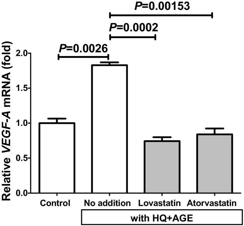 Induction of VEGF-A expression by the addition of lovastatin or atorvastatin to HQ + AGE-damaged h1RPE7 cells. The h1RPE7 cells were treated with no addition (control), or no addition, lovastatin or atorvastatin in the presence of HQ + AGE for 24 h. VEGF-A mRNA was measured by real-time RT-PCR using β-actin as an endogenous control. Data are expressed as mean ± SE for each group (n = 4).