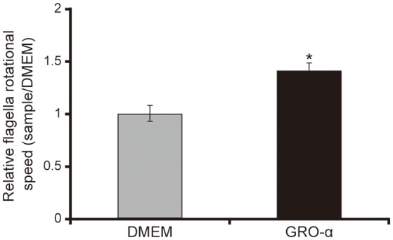 GRO-α facilitates a flagellar filament rotation of the P. aeruginosa PAO1 strain. P. aeruginosa PAO1 strain cells were loaded onto a glass slide precoated with flagellar filament FliC antibodies, and growth regulated oncogene-α or Dulbecco's modified Eagle medium (DMEM; control) was added. Bacterial cells were visualized and recorded as a movie using EVOS microscope, showing videos of the tethered bacteria. The rotational speed was calculated from the number of rotations in 60 s. Error bars indicate standard error ( n = 10). * P