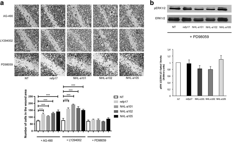 Role of MEK/ERK signaling pathway in migration induced by refp17 and vp17s. <t>MDA-MB</t> 231 cells were serum starved for 24 h in the presence or absence of the PI3K/Akt inhibitor LY294002 (20 μM), the Jak/STAT inhibitor AG-490 (20 μM), or the MEK/ERK1/2 inhibitor PD98059 (10 μM). a Confluent cell monolayers were serum starved for 24 h and then scratched with a 200 μl pipette tip. Cells were then incubated for 6 h in the absence (NT) or in the presence of 10 ng/ml of refp17 or vp17s. Images are representative of three independent experiments with similar results (original magnification 10×). Statistical analysis was performed by one-way ANOVA and the Bonferroni's post-test was used to compare data (*** p