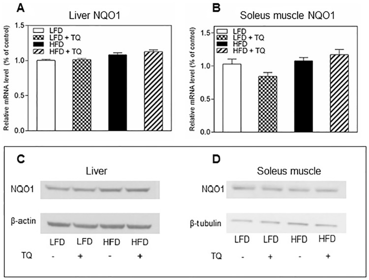 Effects of TQ on NQO1 expression. NQO1 mRNA expression in liver (A) and soleus muscle (B). (C) Western blot images of NQO1 and β-actin protein in liver (D) Western blot images of NQO1 protein in soleus muscle. β-tubulin was used as a loading control. Statistical analysis (A and B): one-way ANOVA followed by Sidak post-test (p≤0.05). qPCR results are means ± SEM (n = 8–12 mice per treatment group). Western blot images are representative of combined liver and soleus muscle lysates from n = 10–12 mice per treatment group. LFD: low fat diet, HFD: high fat diet, TQ: thymoquinone.