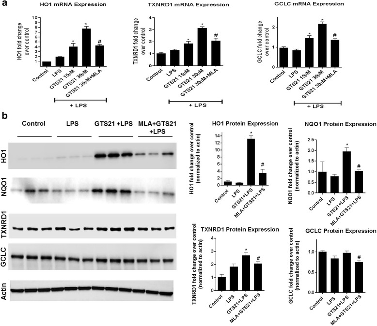 <t>α7</t> <t>nAchR</t> activation induced upregulation of canonical Nrf2 antioxidant genes. a Pretreatment with GTS21 (15 and 30 μm) for 1 h resulted in significant upregulation of canonical Nrf2 antioxidant genes HO1, TXNRD1, and GCLC, in astrocytes treated with LPS for 24 h. α7 nAchR antagonist MLA (1 μm) significantly reduced this effect indicating the specificity of this response. * p
