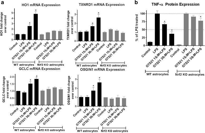 Antioxidant and anti-inflammatory responses of α7 nAchR activation are Nrf2 dependent. a Pretreatment with GTS21 (15 and 30 μm) resulted in significant upregulation of canonical Nrf2 antioxidant genes HO1, TXNRD1, GCLC, and OSGIN1 in wild-type astrocyte cultures treated with LPS (60 ng/ml) for 24 h, but not in astrocytes from Nrf2 knockout mice. * p