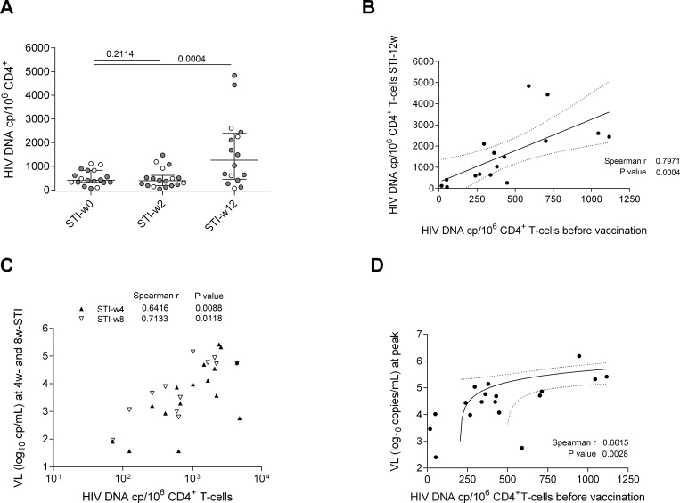 HIV-1 DNA copy numbers in CD4 cells before vaccination predicts extent of viral reservoir replenishment and plasma viral loads after structured treatment interruption (STI). (A) HIV DNA copy numbers in PBMC-derived, purified CD4+ T cells at start of STI (STI-w0), and 2 (STI-w2) or 12 (STI-w12) weeks after start of STI in placebo (white) and vaccinated individuals (grey). Median copy number (with interquartile range) is shown in all conditions (p-values Wilcoxon paired test). (B) Correlation between HIV DNA copy number in purified CD4+ T cells before any vaccination and after 12 weeks into STI (n = 16). Spearman correlation coefficient and p-value are shown. Linear regression line with 95% confidence intervals is represented. (C) Correlation between HIV DNA copy numbers per 10 6 CD4 T cells at 12 weeks into STI and plasma viral loads (log 10 copies/mL) 4 or 8 weeks after start of STI. Viral load at 4 weeks into STI (n = 16) is shown in white triangles and at 8 weeks (n = 12) in black triangles (r and p-value are shown for Spearman correlation). (D) Correlation between peak of viral load (log 10 copies/mL) uring STI and HIV DNA copies detected before vaccination. Spearman correlation coefficient and p-value are shown. Linear regression line with 95% confidence intervals is represented.