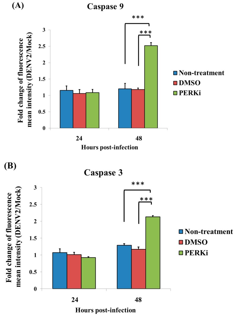 The effect of the PERK inhibitor on activation of caspases-9 (the initiator) and -3 (the effector) in C6/36 cells with dengue 2 virus (DENV2) infection by using FACScan flow cytometry. ( A ) In DENV2-infected C6/36 cells (MOI = 1), no evident change in caspase-9 had occurred in cells by 24 h post-infection (hpi), even when they were treated with a PERK inhibitor (5 μM). However, it had increased by 48 hpi (2.52-fold increase) compared to the two control groups (1.20- and 1.18-fold for untreated and DMSO-treated cells, respectively; Student's t -test; *** p