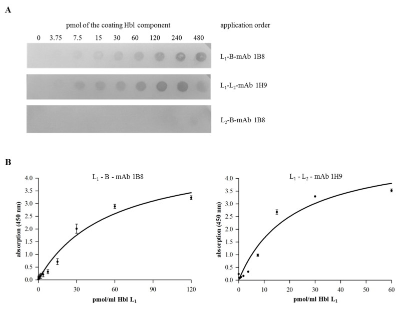 Detection of rHbl complex formation. ( A ) Dot blot. PVDF membranes were coated with rising concentrations (3.75–480 pmol) of different rHbl components. After blocking, the membrane was incubated in <t>PBS</t> with the second component (30 pmol). Proteins were detected using the <t>Hbl</t> B-specific mAb 1B8 [ 29 ] and the Hbl L 2 -specific mAb 1H9 (this study). Inversion of the protein order showed similar results and negative controls confirmed the specificity of the reaction (see Figure S1 ). ( B ) Indirect EIA. The first rHbl component was applied as serial dilution to a microtiter plate. After washing, the second rHbl component was applied in constant concentration (60 pmol/mL). After blocking, Hbl B-specific mAb 1B8 [ 29 ] and Hbl L 2 -specific mAb 1H9 (this study) were applied, respectively, followed by rabbit-anti-mouse-HRP conjugate for detection. Details on the non-linear regression are shown in Table S2 .