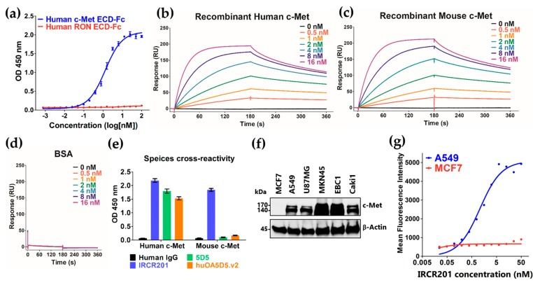 Binding properties of IRCR201. ( a ) Binding patterns of IRCR201 to the human c-Met extracellular domain (ECD)-fragment crystallizable region (Fc) and the human RON (recepteur d'origine nantais) ECD-Fc were measured by enzyme-linked immunosorbent assay (ELISA). IRCR201 binds to the human c-Met ECD-Fc with specificity and selectivity; ( b – d ) Surface plasmon resonance (SPR) sensorgrams binding with varying concentrations of IRCR201 to human c-Met, mouse c-Met, or bovine serum albumin (BSA) immobilized onto a CM5 Biacore TM sensor chip; ( e ) Cross-reactivity analysis of IRCR201 to human and mouse c-Met; ( f ) Analysis of c-Met expression in various types of cancer cell lines; ( g ) Binding analysis of IRCR201 to the cell surface c-Met through a flow cytometer (FACSAria™ III).