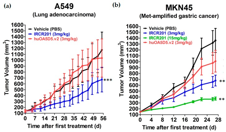 In vivo potency of IRCR201 in c-Met-expressing tumor xenograft models. ( a ) IRCR201 was dosed intravenously twice a week at 3 mg/kg in an A549 non-small cell lung cancer (NSCLC) xenograft model, as compared with the PBS-treated group or huOA5D5.v2-treated group; ( b ) IRCR201 was intravenously injected at 3 or 15 mg/kg twice a week in an MKN45 gastric cancer xenograft model compared with the PBS-treated group or huOA5D5.v2-treated group. Six mice per group were used for the A549 and MKN45 studies. Asterisks (*) indicate p -values versus PBS-treated group (vehicle group) according to one-tailed two-sample t -test. p -Value