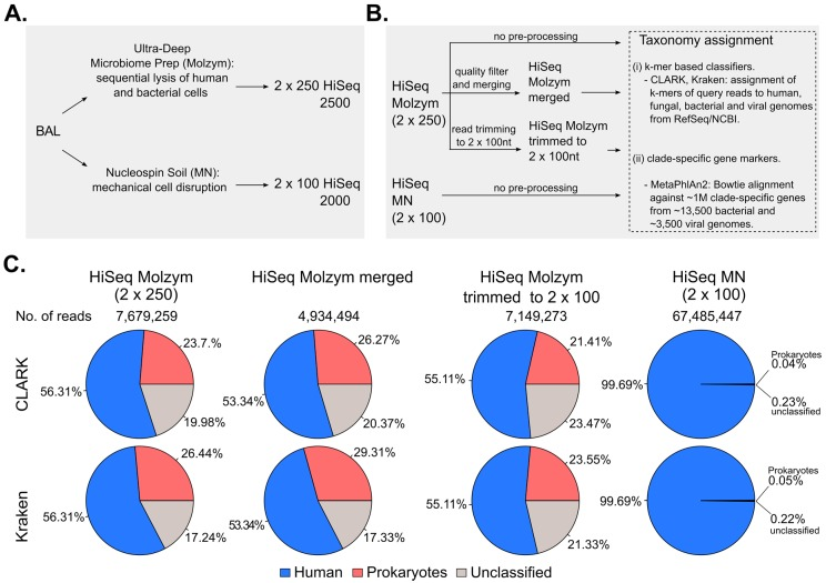 ( A ) Schematic representation of metagenomic sequencing: BAL was split into two aliquots which were independently treated with two DNA extraction protocols: Ultra-Deep Microbiome Prep (Molzym) and NucleoSpin Soil (MN). Metagenomic libraries were independently sequenced with 2 × 250 HiSeq 2500 and 2 × 100 Hiseq 2000, respectively; ( B ) Schematic representation of bioinformatics analyses: forward and reverse raw reads of Molzym- (HiSeq Molzym (2 × 250)) and MN-treated (HiSeq MN (2 × 100)) samples were used for taxonomic analysis with CLARK, Kraken and MetaPhlAn2. In addition, before taxonomic analyses, read pairs of the HiSeq Molzym (2 × 250) dataset were either quality-filtered and merged (HiSeq Molzym merged) or trimmed to the length of 100 nt (HiSeq Molzym trimmed to 2 × 100) as described in Materials and Methods; ( C ) Pie-charts representing the proportions (%) of sequencing reads classified as human (in blue), prokaryotic (red) or unclassified (grey) by CLARK (top row) and Kraken (bottom row). Proportions were computed over the total number of reads present in a given dataset. Viral- and fungal-classified read proportions are not shown and contributed to less 0.02% of total reads in all sequencing datasets.