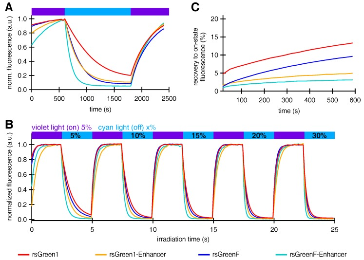 The effect of Enhancer nanobody binding on the photoswitching behavior of rsGreens. ( A ) Normalized average fluorescence of E. coli colonies expressing indicated FPs upon irradiation with violet, blue and violet light. ( B ) Normalized average fluorescence in HeLa cells upon irradiation with violet and cyan light with indicated preset powers. ( C ) Spontaneous, thermal recovery of the fluorescence in HeLa cells after off-switching with cyan light. a.u.: arbitrary units.