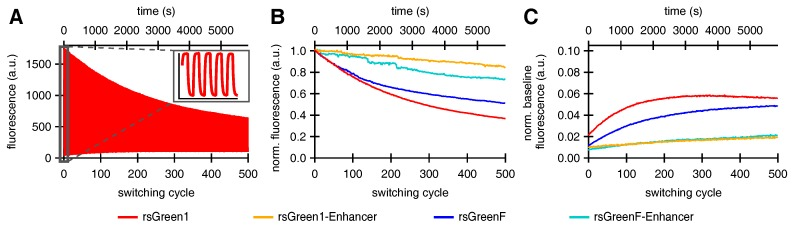 The effect of Enhancer nanobody binding on the repeated <t>photoswitching</t> behavior of rsGreens in <t>HeLa</t> cells (500 cycles): ( A ) representative fluorescence photoswitching trace of rsGreen1, inset shows the initial five switching cycles; ( B ) signal of the maximally on-switched frame for each switching cycle scaled to the initial on-state fluorescence; and ( C ) baseline fluorescence (maximally off-switched frame) as fraction of the initial on-state fluorescence.