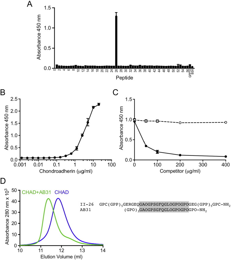Collagen binding by <t>chondroadherin.</t> (A) Binding of <t>biotinylated</t> chondroadherin to immobilised Collagen Toolkit II peptides. Binding was detected with streptavidin-HRP and TMB substrate (absorbance at 450 nm). Error bars show standard deviation from three technical replicates. (B) Dose-response curve of chondroadherin binding to peptide II-26 peptide interaction. (C) Inhibition of the chondroadherin-collagen II interaction by peptide II-26 peptide (solid line) or peptide III-8 (negative control, dashed line). (D) Binding of peptide AB31 to chondroadherin (CHAD) in solution analysed by size exclusion chromatography. AB31 and chondroadherin were mixed in a 2:1 molar ration and incubated for 15 min before injection onto the Superdex 75 column. The sequences of peptides II-26 and AB31 are indicated on the right and the sequence common to both is shaded.