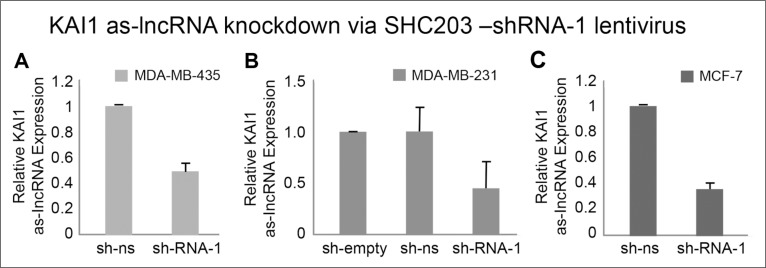 """Quantitation of KAI1 as-lncRNA following its shRNA mediated knockdown in MDA-MB-231, MDA-MB-435 and MCF-7 cells qRT-PCR after MDA-MB-435 (A) , MDA-MB-231 (B) and MCF-7 cells (C) infection with SHC-shRNA vector empty, SHC-shRNA- non-silencing (ns) or shRNA-1 against KAI1 as-lncRNA (SHC-shRNA-1). All samples were reverse transcribed with RevertAid Premium RTase (or without RTase as control). Results are average of five independent experiments in triplicates. HPRT-1 mRNA served as endogenous control. The mean of sh-ns was set to 1 in panels (A C), with the mean value of sh-empty set to 1 in panel (B). p (""""SHC-shRNA-1"""")"""