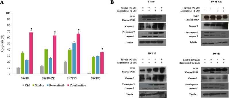 Effects of regorafenib in combination with silybin on induction of apoptosis in SW48, SW48-CR, HCT15 and SW480 colon cancer cells ( A ) Apoptosis was evaluated with Annexin-V-FITC staining and 7-Amino-Actinomycin D (7-AAD) detection assays using flow cytometry in SW48, SW48-CR, HCT15 and SW480 cancer cells after 24 hours of incubation with silybin (90 μM) or regorafenib (2 μM) and their combination. Histogram of data expressed as percentage of apoptotic cells.* p