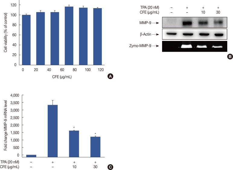 CFE inhibits TPA-induced MMP-9 expression in MCF-7 cells. (A) To assess the cytotoxicity of CFE, cells were treated with various concentrations of CFE for 24 hours. An EZ-cytox enhanced cell viability assay kit was used to detect the. (B) CFE inhibits TPA-induced MMP-9 expression in MCF-7 cells. MCF-7 cells grown in monolayer culture were treated with the indicated CFE concentrations in the presence of TPA for 24 hours. Cell lysates were analyzed by Western blot with anti-MMP-9 antibody and β-actin as a loading control. Conditioned medium was prepared and used for gelatin zymography (Zymo) to assess the effect of CFE on MMP-9 activity in MCF-7 cells. Cells were pretreated with CF for 1 hour and then stimulated with TPA for 24 hours. (C) MMP-9 mRNA levels were analyzed by RT-qPCR, and GAPDH was used as an internal control. Values are shown as mean±SEM of three independent experiments. CFE= Crotonis fructus extract; TPA=12-O-tetradecanoylphorbol-13-acetate; MMP-9=matrix metalloproteinase-9; Zymo=zymography; RT-qPCR=real-time quantitative polymerase chain reaction; GAPDH=glyceraldehyde 3-phosphate dehydrogenase; SEM=standard error of the mean. * p